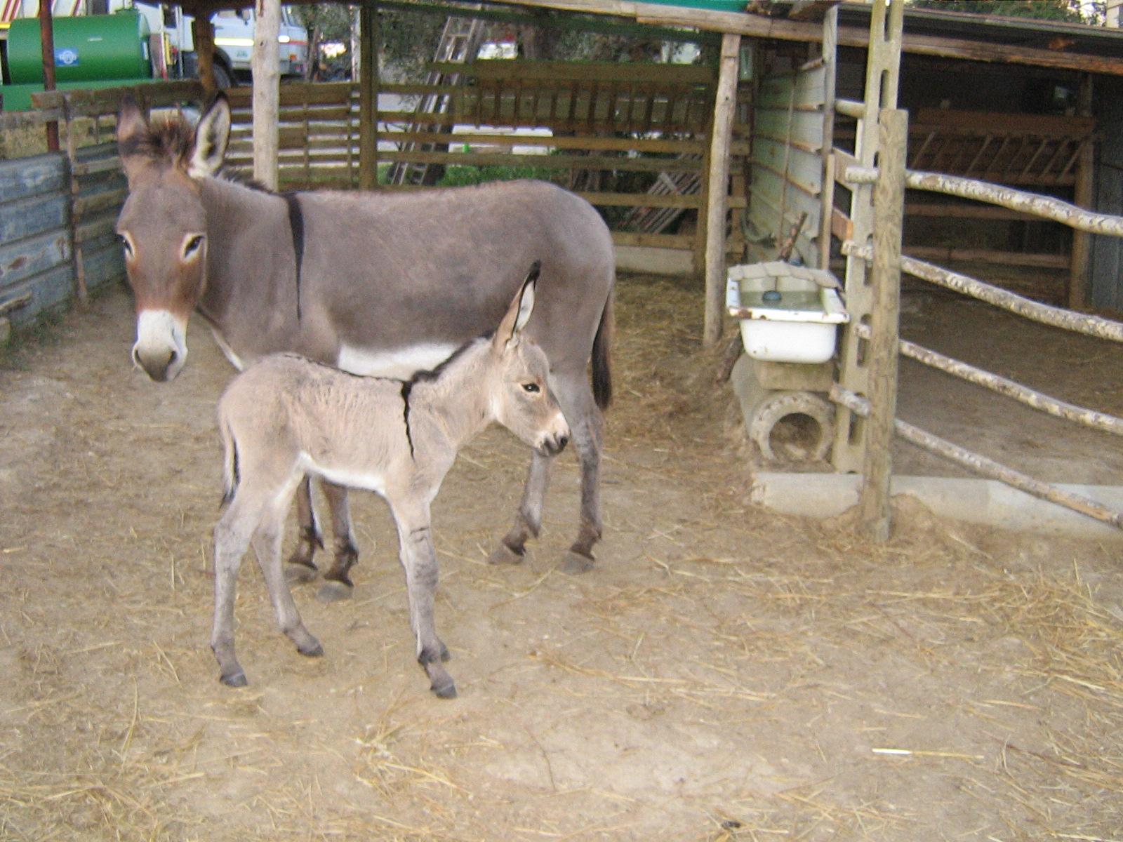 Foto in vendita allevamento boxer west highland white for Quanto costa mantenere un cavallo